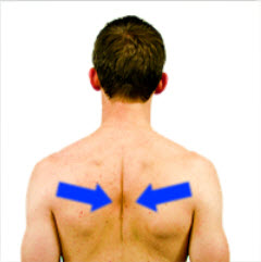 Squeezing your shoulder blades together is a great exercise to strengthen the muscles of the middle back